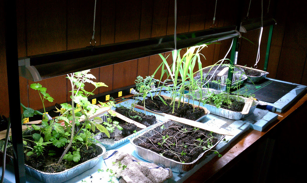 Keys to Lighting Your Indoor Gardening System  Gardenerd