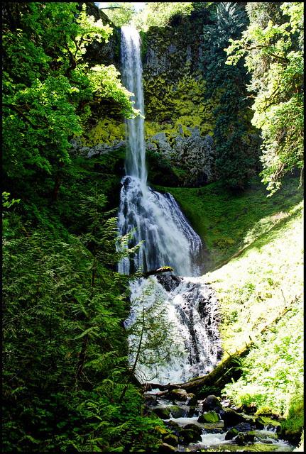 Pup Creek Falls - Clackamas River Trail