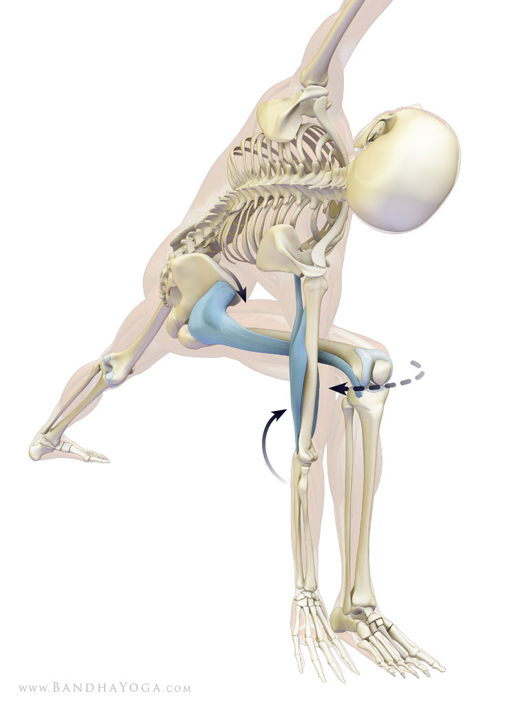 tensor fascia lata and triceps