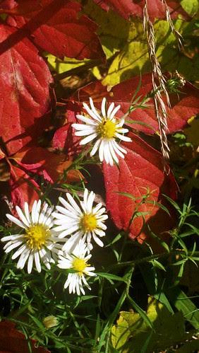 2011-10-05_15-12-21_225