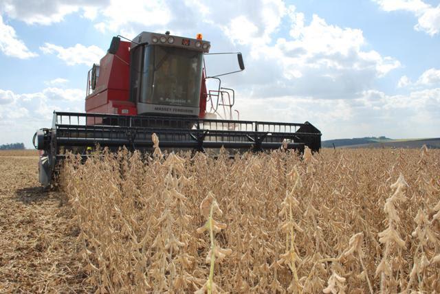 A dessecação facilita a colheita de grãos, pois promove a rápida e completa secagem de todas as partes verdes da planta - Crédito Luiz Henrique Magnan