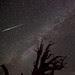 Perseid Meteor Over Bristlecone Pine