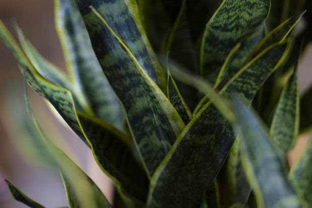 Different Types of Houseplants for Your Home