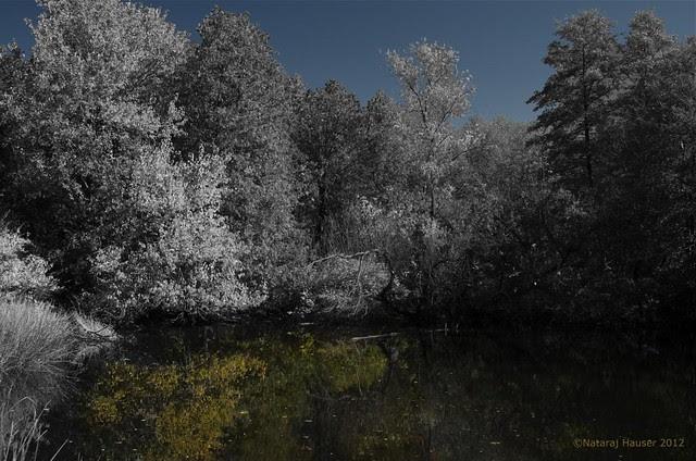 Memories of Autumn 2 (DS3_4077)