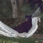 BEAR_HAMMOCK_DAYTONABEACH_-_MUST_COURTESY_RAFAEL_TORRES_1