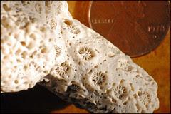 Coral Macro (lowest)