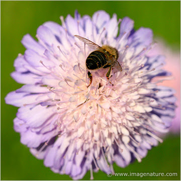 Bee busy on a flower