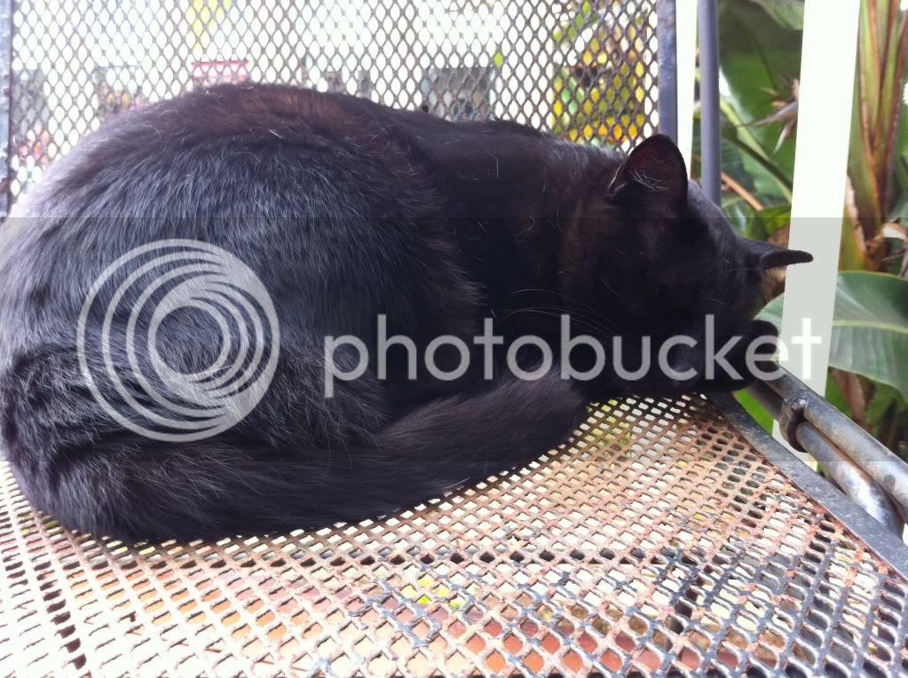 Kauai Stray Cat