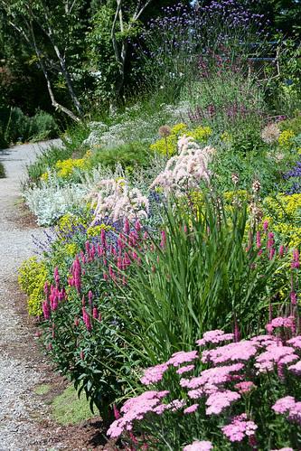 perennial garden2