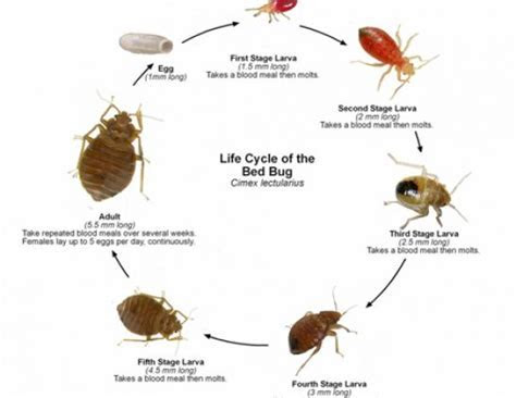Rat burrows, removing yellow jacket nest, how to get rid bed bugs fast, how to eradicate house