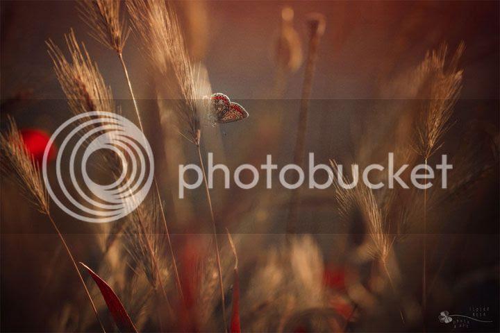 photo Ildiko-Neer-4_zpstzskf7y7.jpg