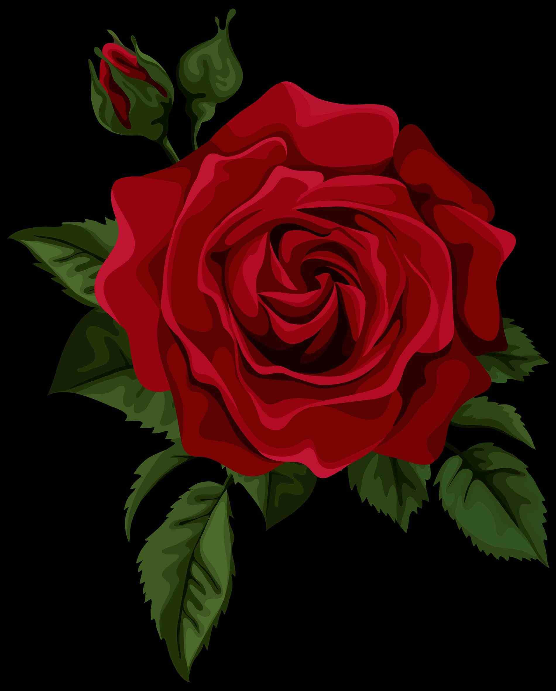 Download 980 Koleksi Wallpaper Tumblr Red Rose Gratis