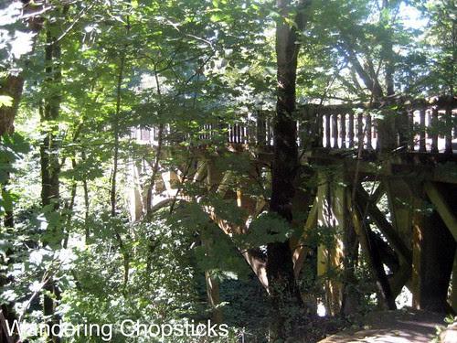 Day 4.8 Latourell Falls - Columbia River Gorge - Oregon 13