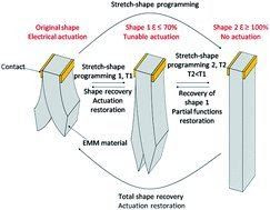 Músculo artificial é capaz de lembrar movimentos