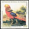 Golden Pheasant Chrysolophus pictus