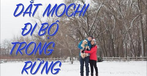 Cuộc sống Toronto - Mochi vào rừng ở Oshawa đi bộ - Mochi không biết cách để đi qua cầu.