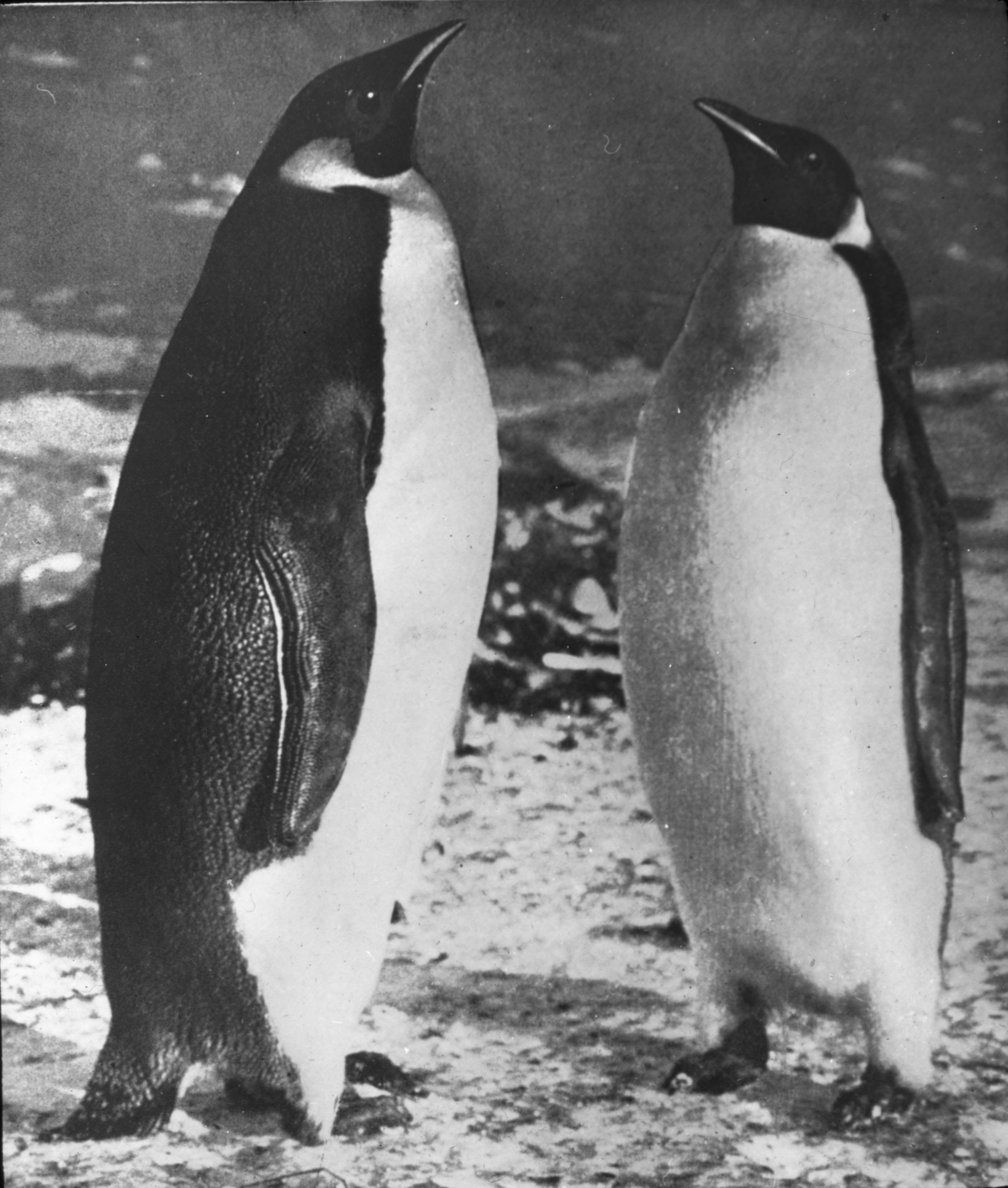 http://upload.wikimedia.org/wikipedia/commons/d/dd/Shackleton_nimrod_76.jpg