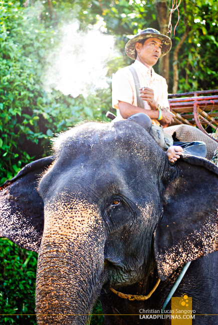 Elephant Trainer at Phuket's Camp Chang Kalim