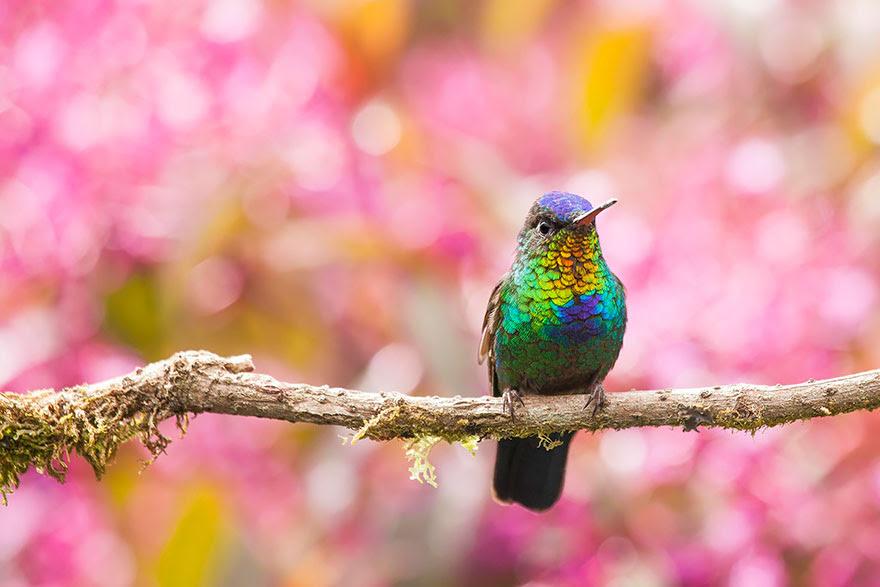 cute-beautiful-hummingbird-photography-17