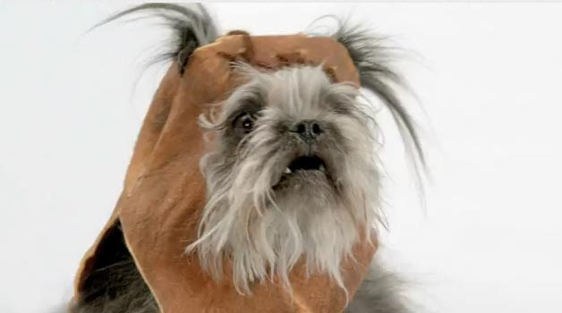 dog dressed up like an ewok from a volkswagen commercial