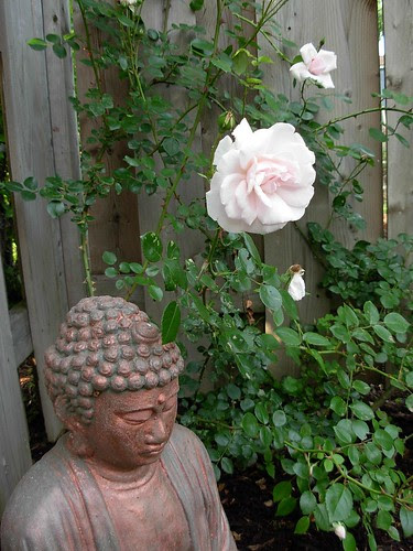 pink rose with Buddha