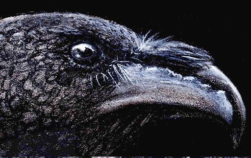 Raven Head Detail by NeuroVizier