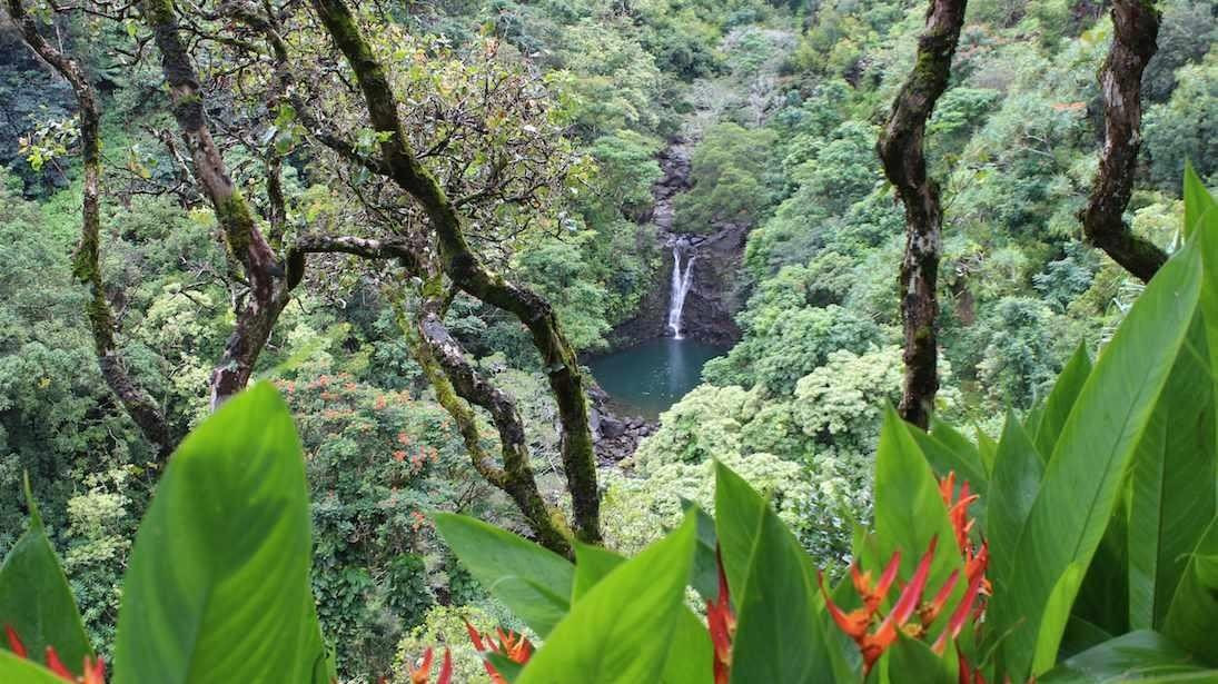 Have $20M? You Can Buy the Garden of Eden … in Hawaii ...