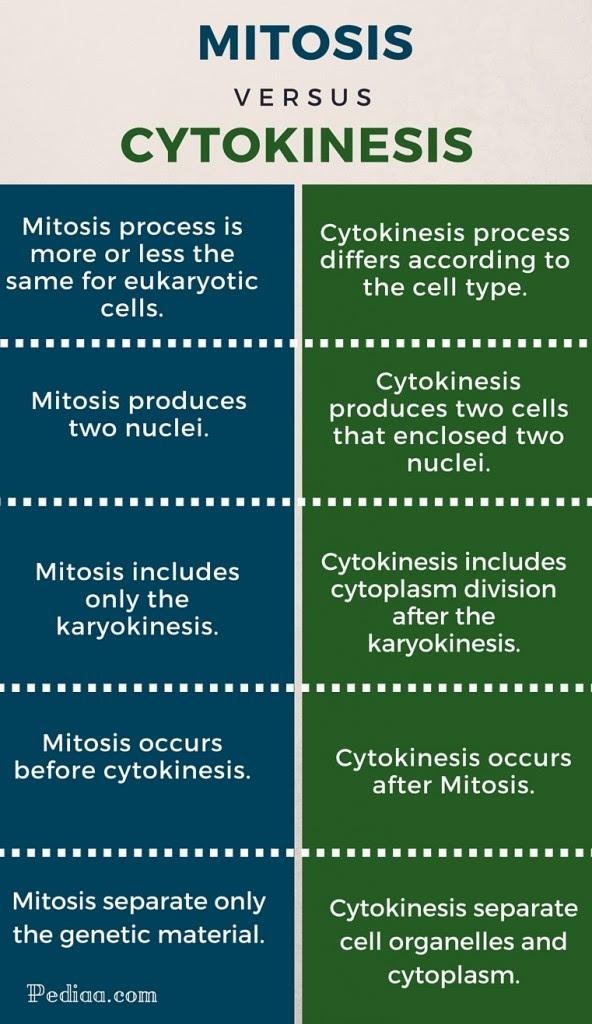 Difference Between Mitosis and Cytokinesis - Pediaa.Com