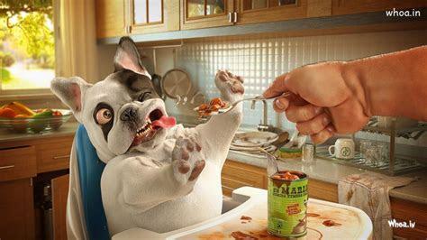 dog  eat food  funny face hd wallpaper