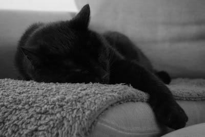 Haidu Snooze