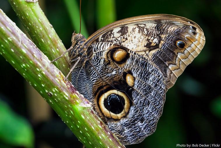 πεταλούδα-3