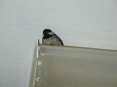 Bird on a light fixture