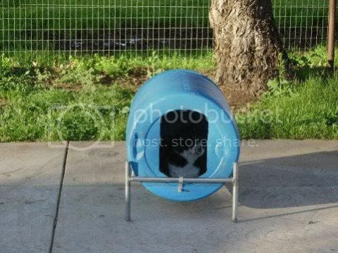 55 Gallon Plastic Barrel Dog House Newswilkinskennedycom
