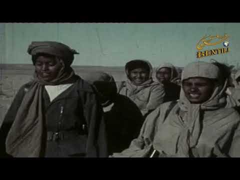 فيديو: سيرة شاعر الثورة بيبوه بدي ولد الحاج
