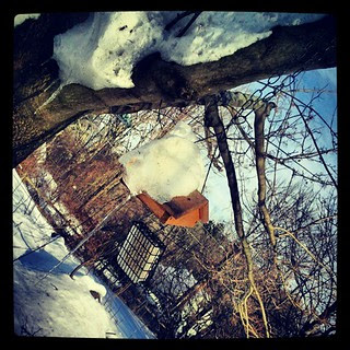Ice, Ice Baby! Even the #bird feeders have #icicles