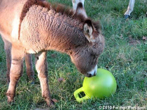 Donkey Ball 12