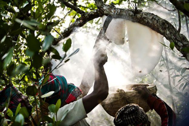 Sundarbans National Park, Bangladesh - Tim Gerard Barker/www.tpoty.com