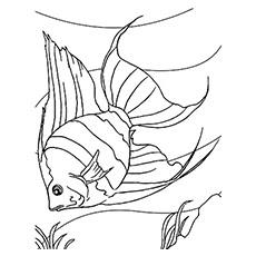 Exotic Fish Drawing at GetDrawings   Free download
