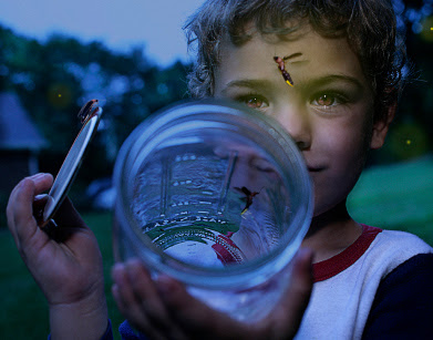 Boy Catching Fireflies and Putting Them in a Jar