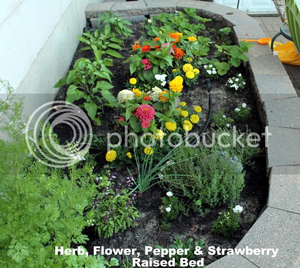 Herb, Strawberry, Pepper & Flower Garden
