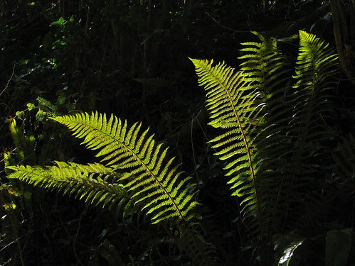 Fern Series - 4 by elhawk