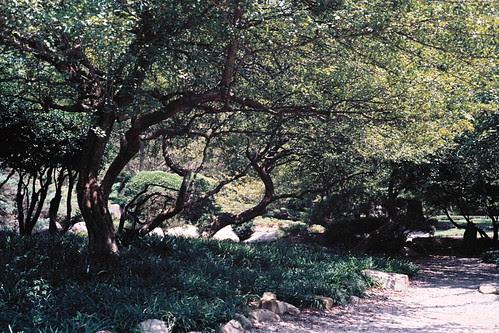 Shrine Trees