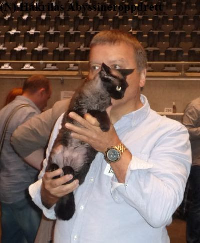 Min rasekattkollega (i samme katteklubb som meg) med den kjempefine devon rex katten sin før nomineringen :)