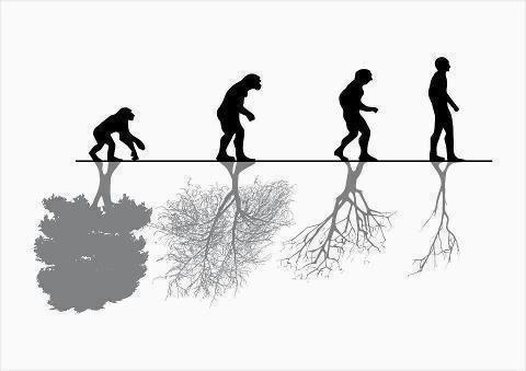evolucion humana, evolucion, homo sapiens, evolucion bosque