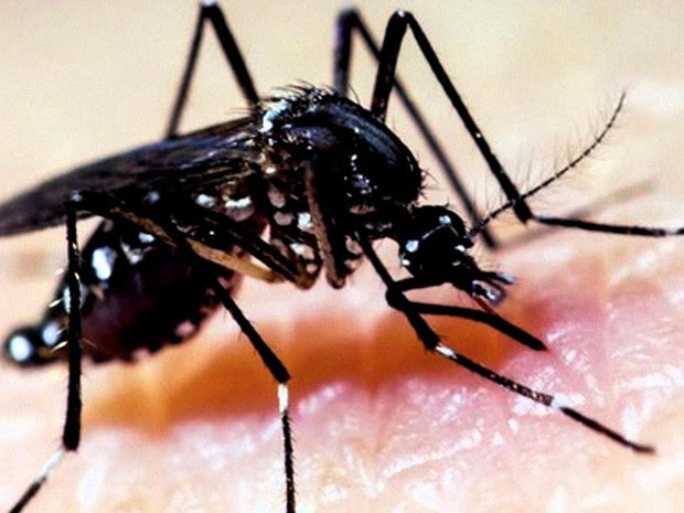 Aedes Aegypti JG (Foto: Reprodução: TV Globo)