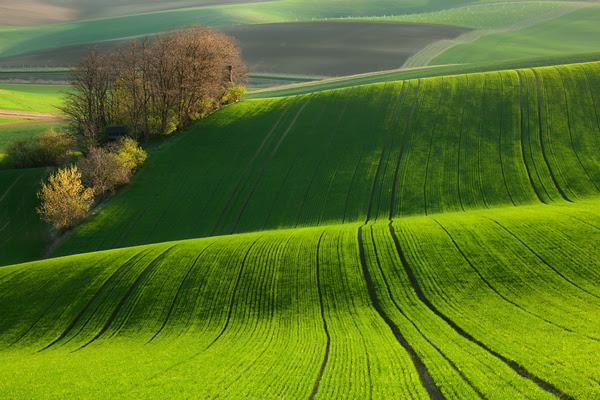 perierga.gr - Ένα καταπράσινο... τσουνάμι στη φύση!