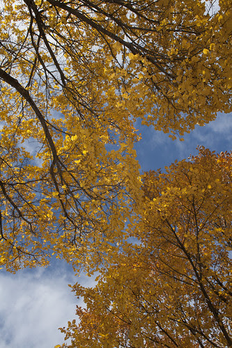 Autumn Towards the Sky (SOTC 75/365) by gina.blank