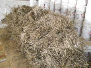 Wheat Sheaves in Barn Loft