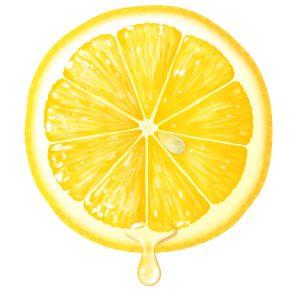 レモンの輪切りのイラスト Illust Furit