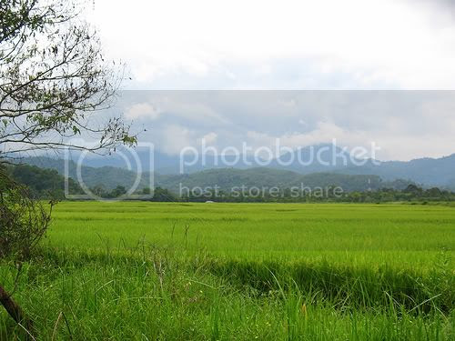 sawah Pictures, Images and Photos